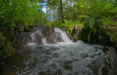 Bachlauf bei Schmallenberg