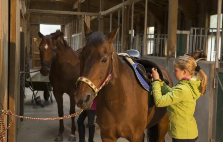 Foto Pferde satteln