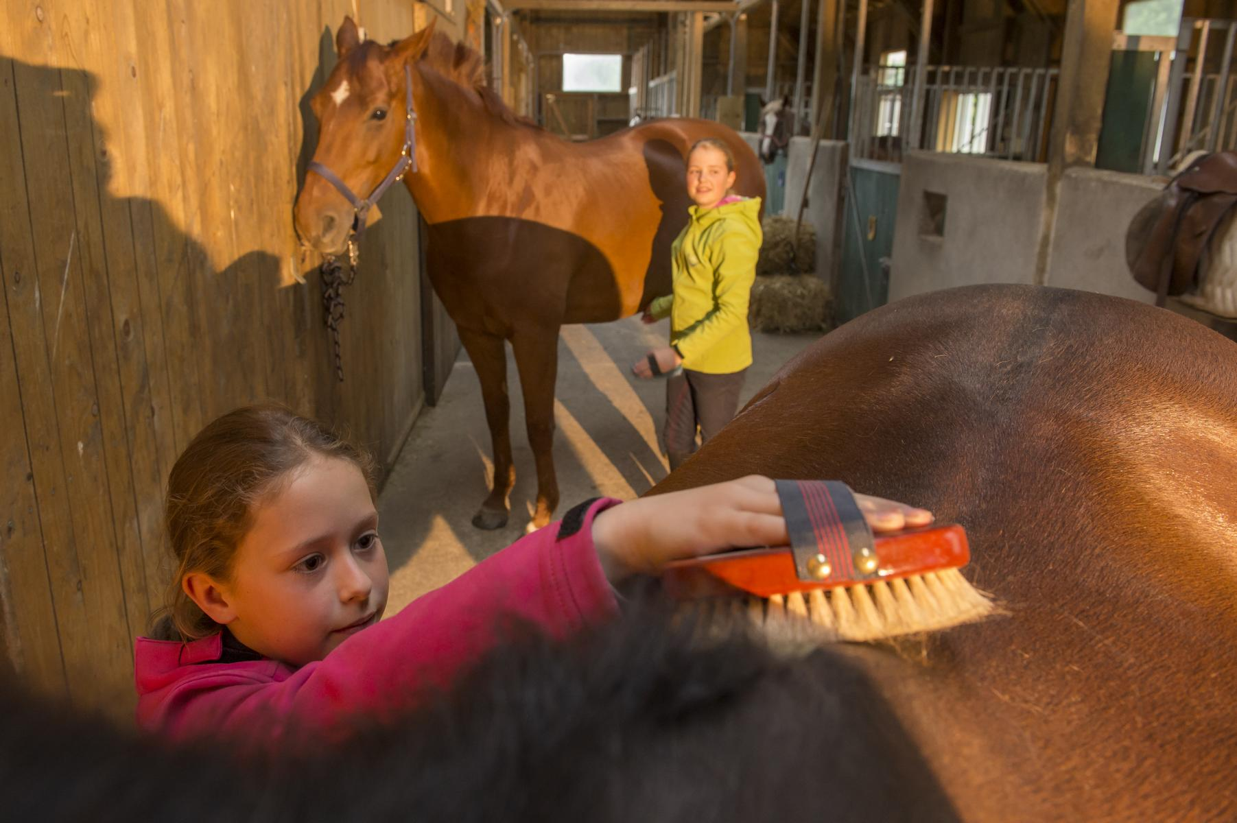 pferdepflege spiel