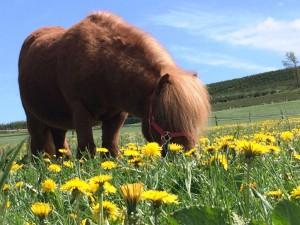 Ponys auf dem Hardthof im Schmallenberger Kinderland