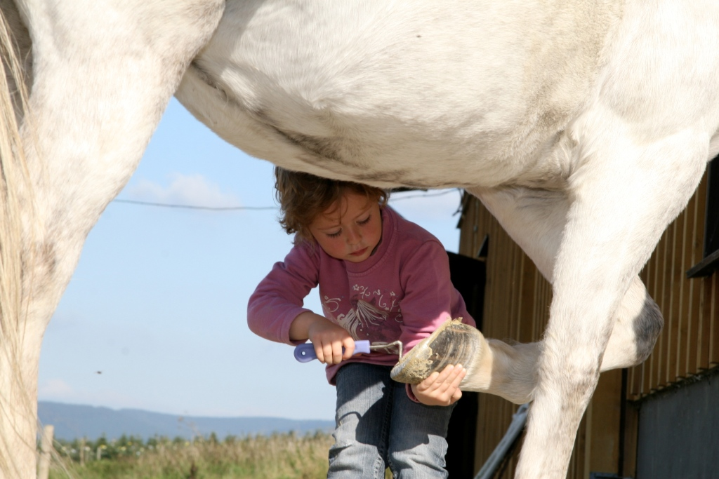 Foto Pferdepflege