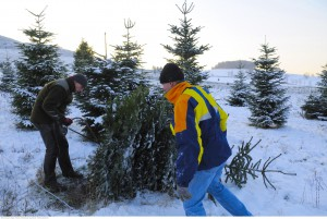 Weihnachtsbaum Selber Schlagen Sauerland.Weihnachtsbaum Hardthof Ferienwohnungen