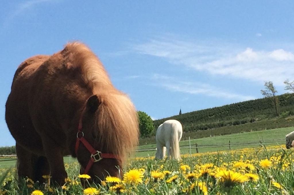 Bauernhoftiere auf dem Ferienhof